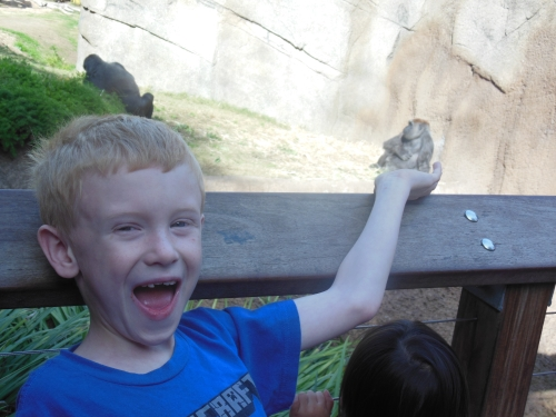 Jake thinks the gorilla is cool!